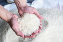 Thai Jasmine Rice Production Is Good Quality Grade A Well Selected Processed Holding Hand The Popular Food Of Thailand.