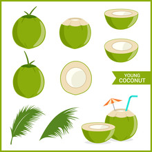 Set Of Fresh Young Coconut In Vector Format And Various Style