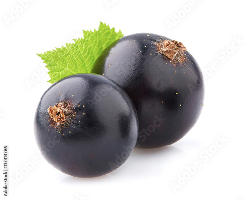Blackcurrant in closeup on white background
