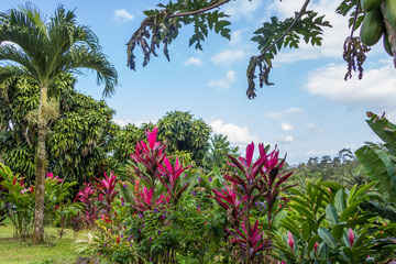 FototapetaBeautiful garden in tropical rainforest
