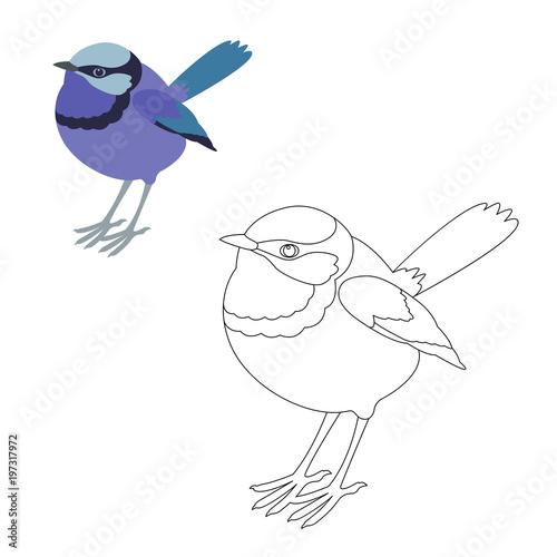 Valokuva  fairy wren bird vector illustration  coloring page