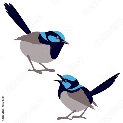 Valokuva fairy wren bird vector illustration flat style