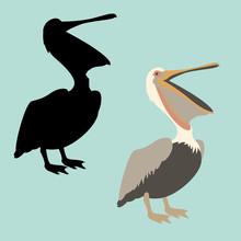 Pelican Vector Illustration Fl...