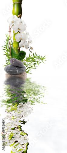 Valokuva bambou orchidée blanche avec reflets