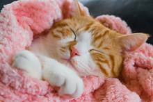 マッタリとお昼寝する茶白ネコ