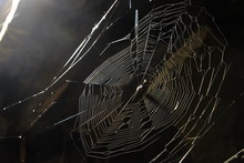 Closeup Of Shiny Spider Web On Black Background With Light From Spotlight At The Top Left Corner