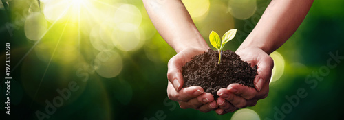 Tuinposter Planten Close Up Plant in Female Hands. Care of the Environment. Ecology concept