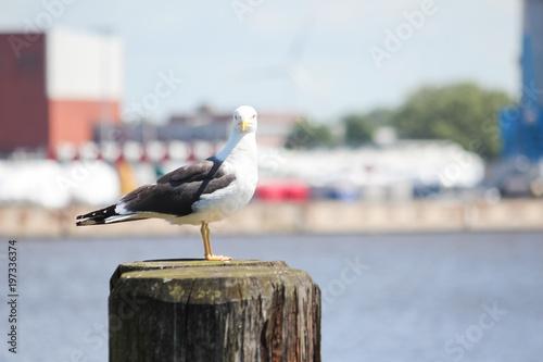 Fotografie, Tablou Möwe sitzt auf Poller im Hafen Emden an der Nordsee