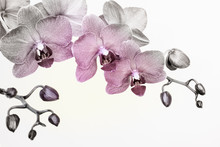 Orchid Branche In Surreal Colors On White Background With Copy Space