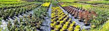 Gartenbau / Anzucht - Gärtnerei