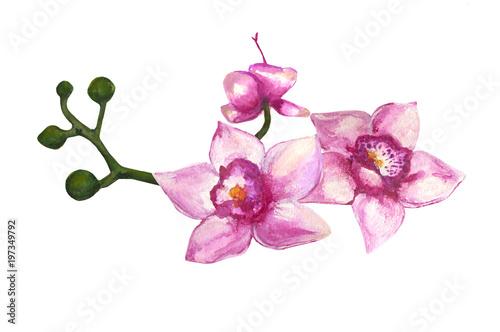 Foto op Plexiglas Magnolia акварель цветок орхидея. акварельная иллюстрация