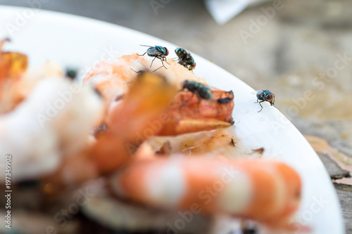 a dirty flies swarm on shrimp and pork grilled on plastic white plate with table Canvas-taulu