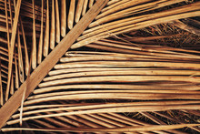Dry Palm Leaf For Background.