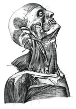 Vintage Anatomy Portrait Vector Illustration Black And White