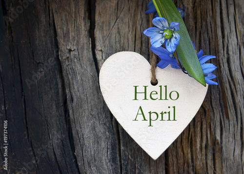 Fotografie, Obraz  Hello April greeting card with blue first spring flowers on wood background