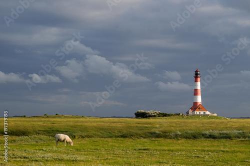 Spoed Foto op Canvas Noordzee Schaf vor Leuchtturm Westerhever