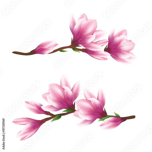 Pink Magnolia Flowers Realistic Vector Brush Illustration Of Two