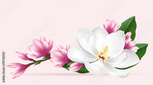 Pink magnolia flowers Canvas Print