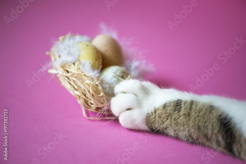 Photo  Cat paw stealing eggs from easter egg nest: concept for spoil the party