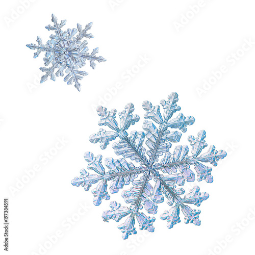 Fototapety, obrazy: Two snowflakes isolated on white background. Macro photo of real snow crystals: large stellar dendrites with complex, ornate shapes, fine hexagonal symmetry, long, elegant arms and glossy surface.