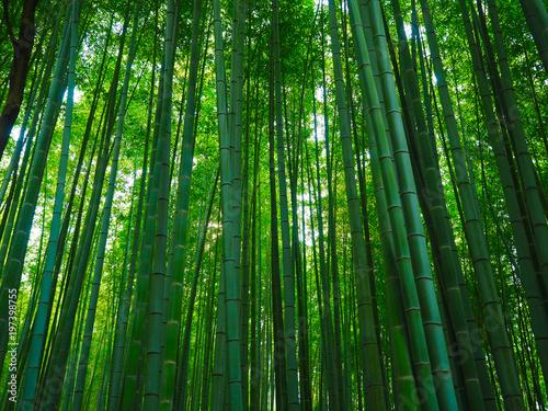 Bambus Wald Hintergrund Buy This Stock Photo And Explore Similar