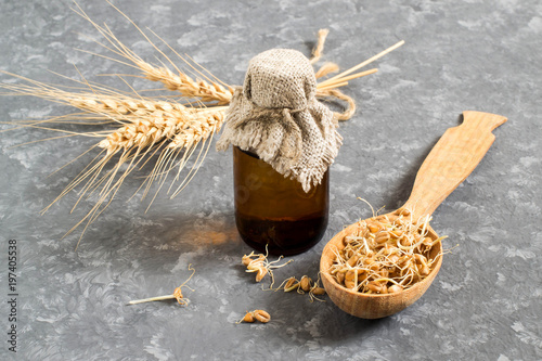 Fresh germinated wheat seeds and wheat germ oil