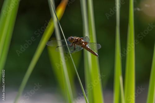drobny owad na tle zielonej rośliny, ważka - 197410312