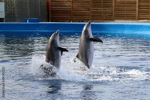 Photo delfin