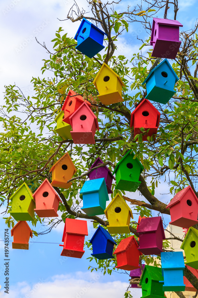 Photo  Many bright colored birdhouses on a mandarin tree