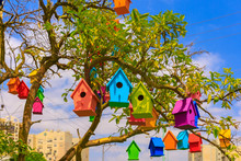 Colored Birdhouses On A Mandar...