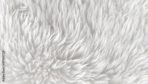 White Fluffy Wool Rug Area Rug Ideas