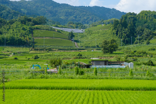 Poster Rijstvelden 京都府和束町の茶畑と田畑