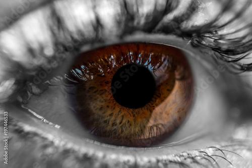 Türaufkleber Makrofotografie Brown human eye macro