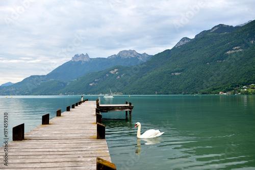 Cygne près d'un ponton du lac d'Annecy