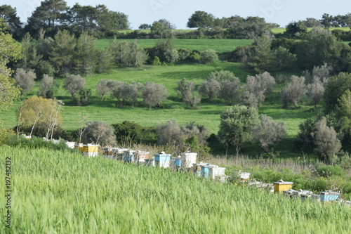 Foto op Canvas Khaki green summer field in northern Cyprus