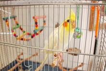 Big Parrot Corella In A Cage