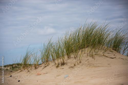 Natur Düne Strand Norderney © EMOZION