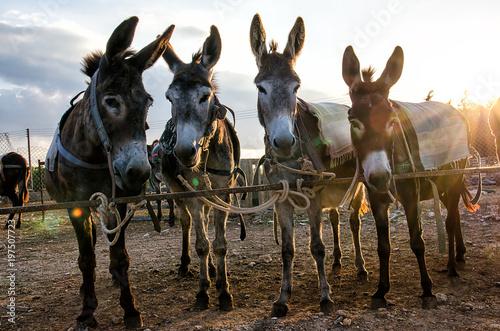 Deurstickers Ezel Donkey Farm in a Cypriot village