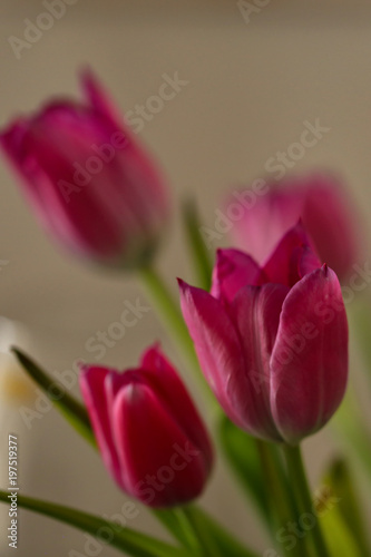 Poster Tulp Tulips / Composition with tulips