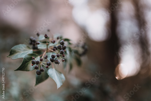 Tuinposter Planten Small plant with dark seeds
