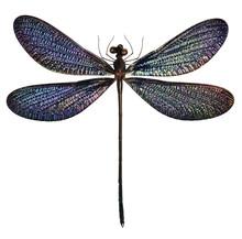 Black And Blue Dragonfly (Vest...