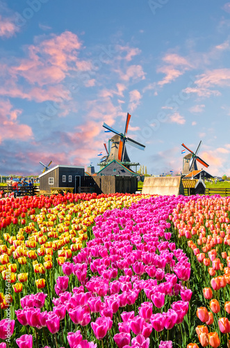 Valokuvatapetti Landscape with tulips, traditional dutch windmills and houses near the canal in