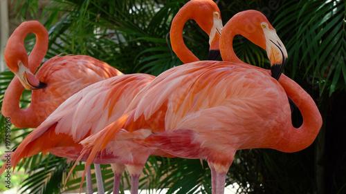 La pose en embrasure Flamingo Pink flamingo close-up
