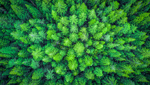 Aerial View On The Redwood Wha...