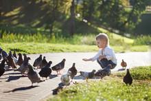 Cute Little Boy Feeds Pigeons ...