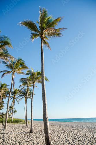 Tropical Florida Beach with Palm Trees Next to the Ocean at Sunrise or Sunset