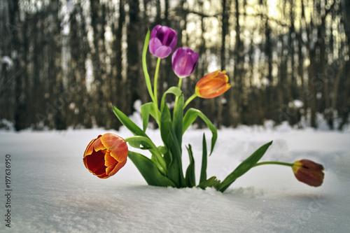 Flowers growing in snowdrift in winter forest