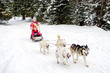 Husky dogs are pulling sledge with two young girls at winter forest in Poland.