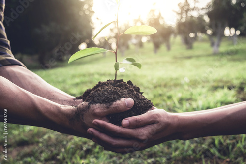 Fotografía  Young couple carrying a seedlings to be planted into the soil in the garden as s
