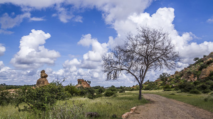 Boulder landscape in Mapungubwe National park, South Africa